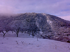 Almendros y el Cerro